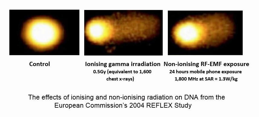 REFLEX-results