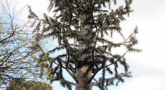 Renewed efforts for cell mast bid