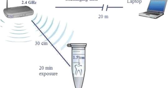 Effect of radiofrequency radiation from Wi-Fi devices on mercury release from amalgam restorations
